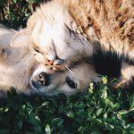 Psi i mačke teško podnose vrućine