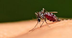 Koje bolesti prenose komarci?